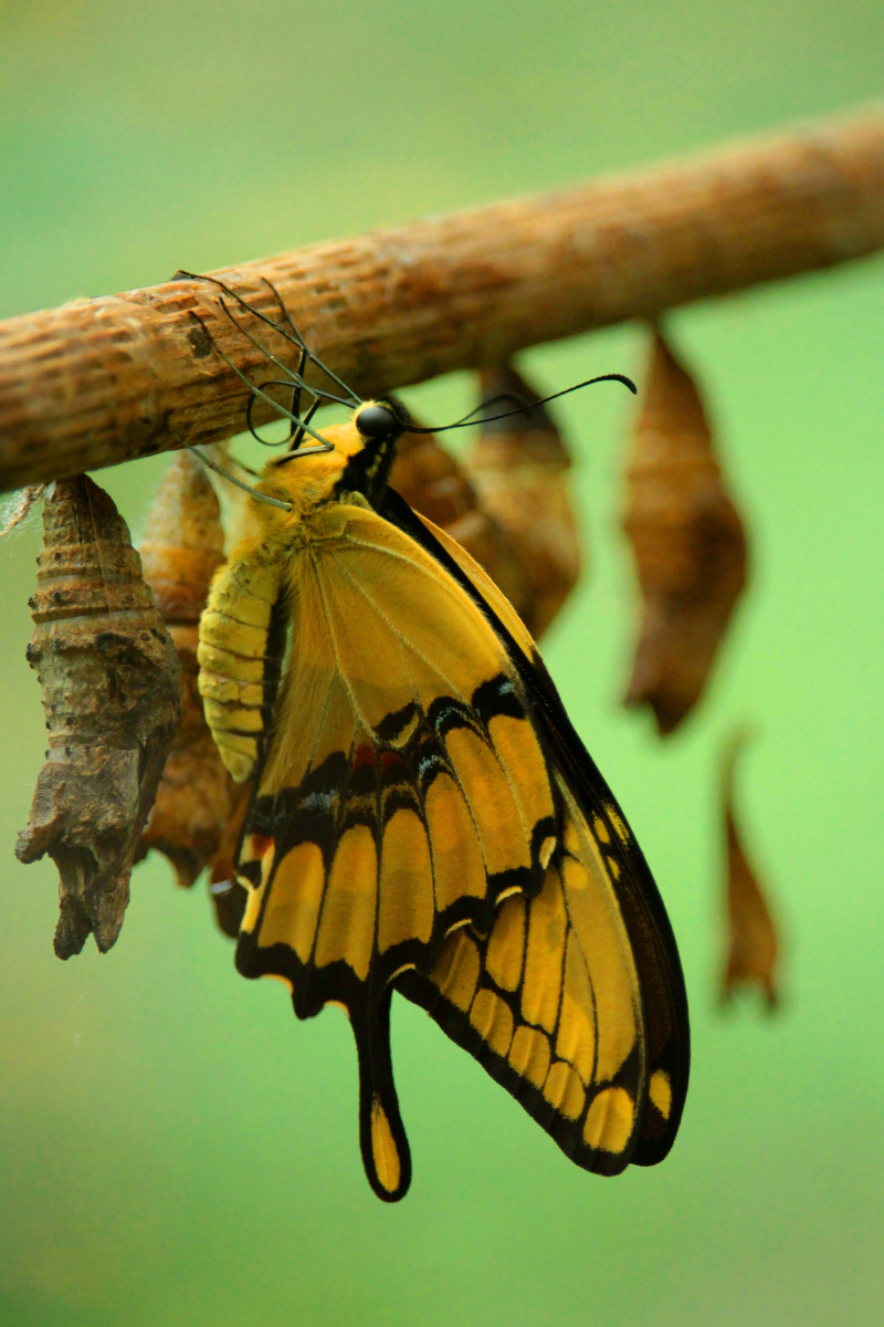 Yellow-and-black-butterfly-2671074